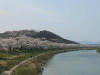 見事な桜並木・・・一目千本桜