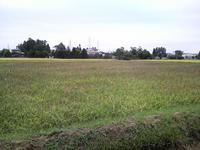 栗駒山と稲刈り