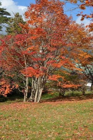 Ryokusuitei Maple Garden