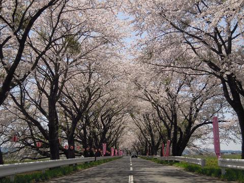 みなみかた千本桜まつり