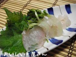 ひらめ三昧(お刺身・寿司・アラ汁)