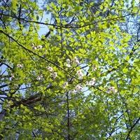 桜~sakura~(4)