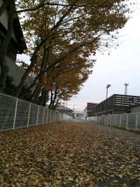秋と落ち葉と…