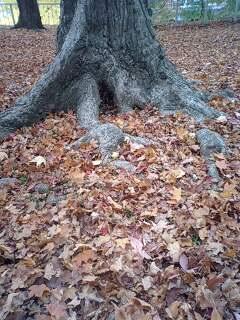 盛岡城公園の紅葉