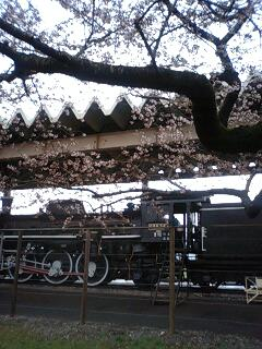 北上展勝地の桜♪