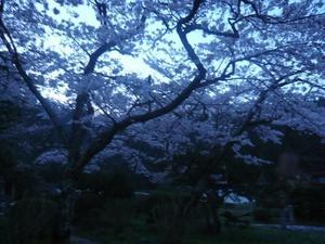 一目千本桜~