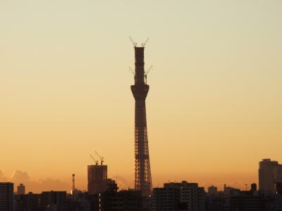 今朝の東京スカイツリー