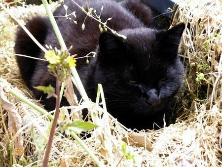 草むらで昼寝
