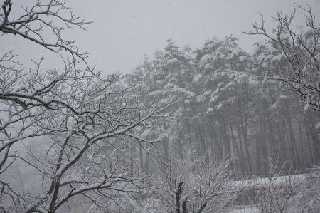 雪、雪、大雪だ~い!