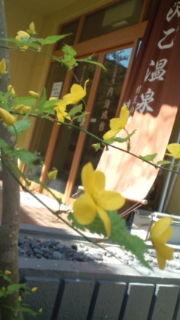 黄色・緑のコントラスト