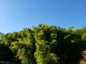 宿の竹林!
