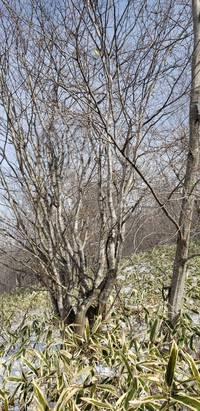 大庭のメイン「山紅葉!」
