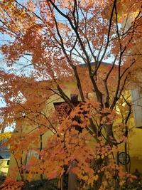 錦秋の山紅葉‼️