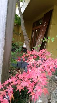 晩秋の紅葉鯛❗