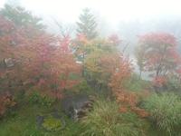 霧の中の蔵王の紅葉