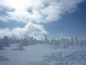 2月20日 樹氷