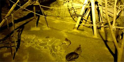 初日の夜の仙台市動物園行きました