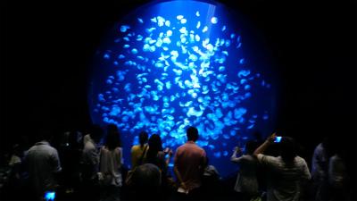 新加茂水族館と映画村へ
