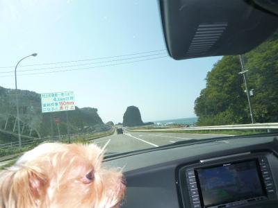 日本海経由で新潟へ日帰りしました