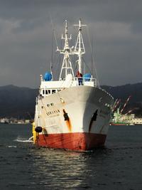 88勝栄丸がマグロ漁終え帰航に