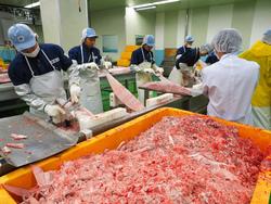 冷凍マグロの加工場視察