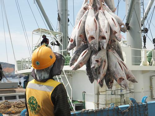 日本漁船初の釜山港水揚げ