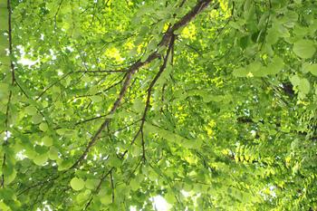 都心の緑に清涼感を感じて