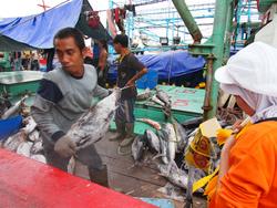 ジャカルタ漁港にて