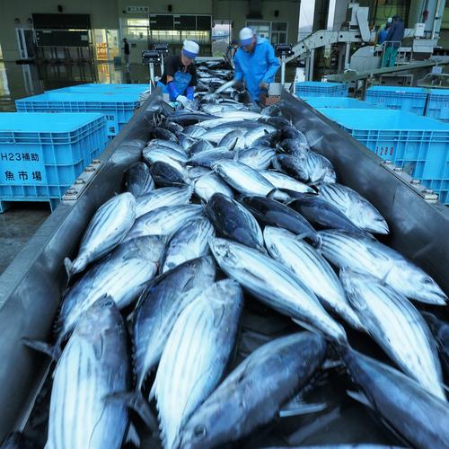 気仙沼漁協の新年懇親会