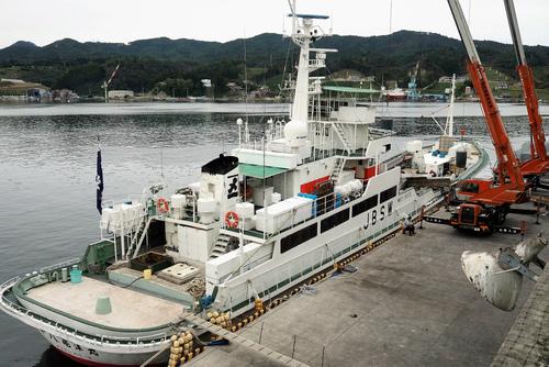 第18亀洋丸が母港水揚げ!