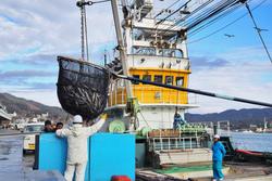 三陸沖のサバが大豊漁