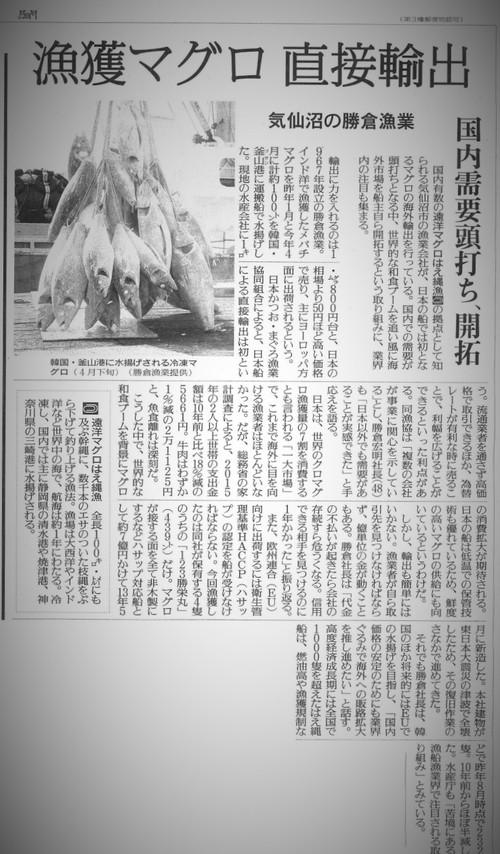 読売新聞にマグロ輸出の記事掲載