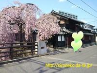 4/16☆桜