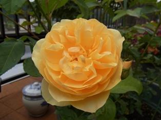 田鶴子の庭日記2011春