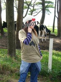 牛といえば・・☆