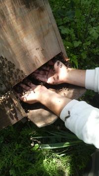 クマのミツバチ便り 5月21日