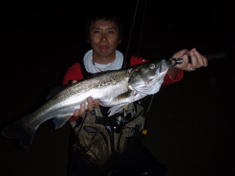 シーバス釣りの極意!?