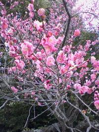 塩竈イベントカレンダー(2008年4月以降)