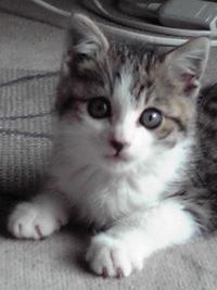 子猫保護4