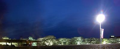 霞城公園と北上展勝地の観桜:3人で