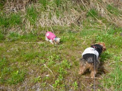 散歩、春の花雑草