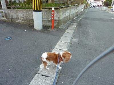 早朝散歩:消火栓 水はどこから