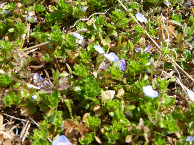 散歩と庭の春の花