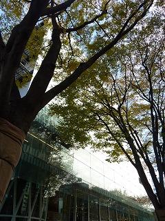 定禅寺通りも秋に