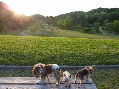 6月の初日朝と夕の散歩