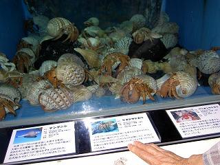 加茂水族館でくらげ見てきました