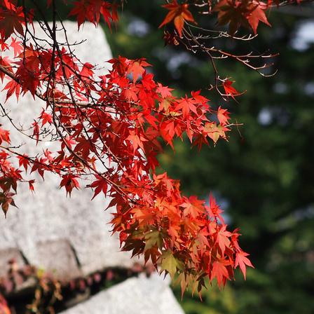 紅葉の秋。。。