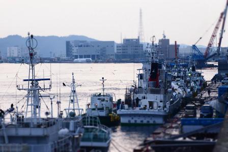 終盤戦の近海かつお漁