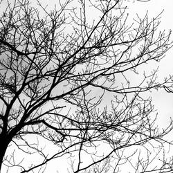 山の木々も冬支度
