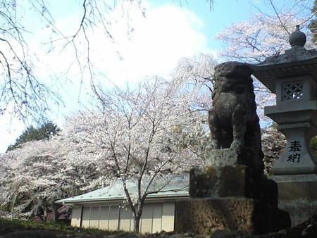 桜!!勝山本拠地の根白石の巻